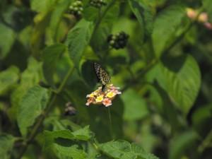Petites fleurs multicolores