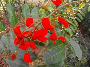 Des fleurs à la texture veloutée